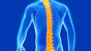 Spinal Health, Ayurveda and Yoga